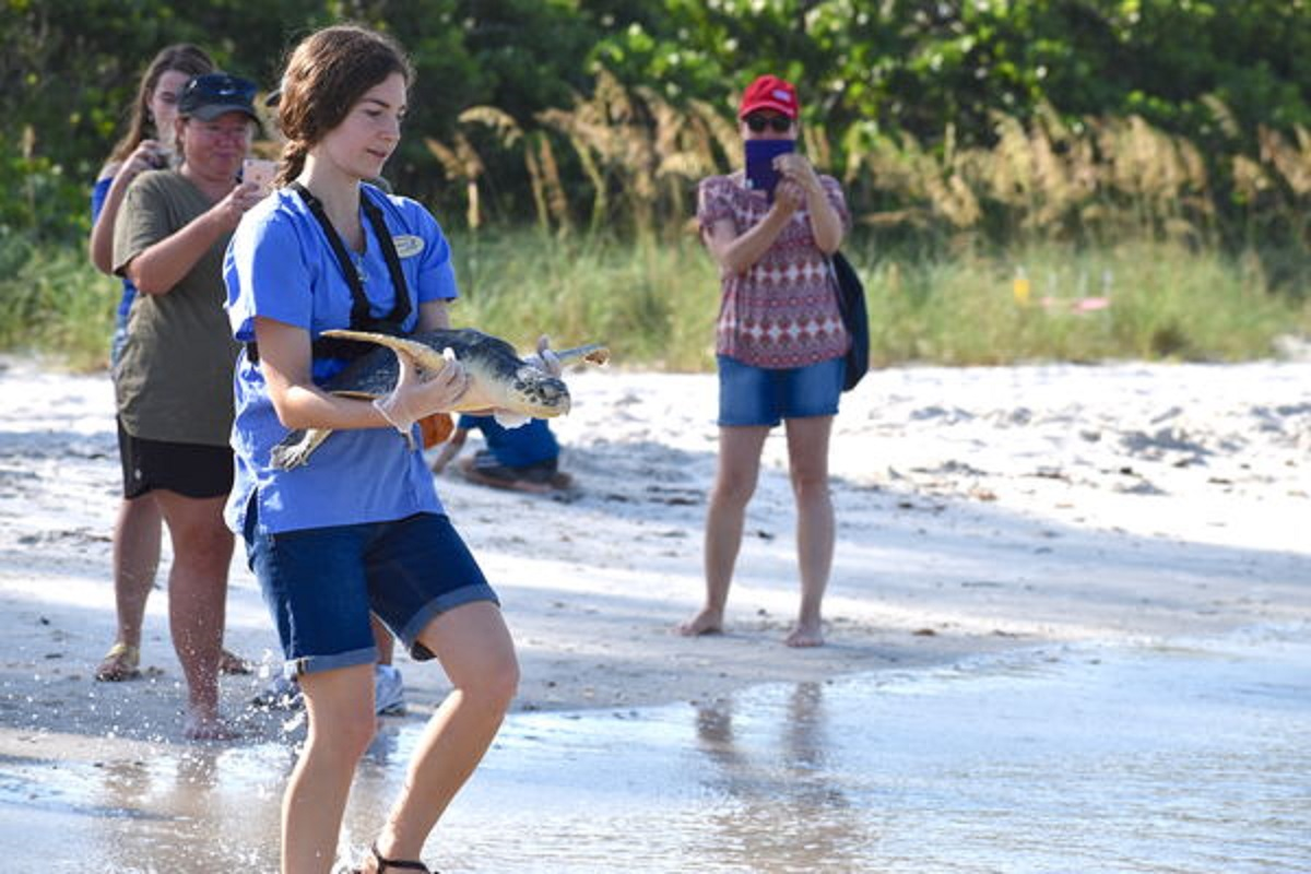 CROW releases a sea turtle back to the ocean
