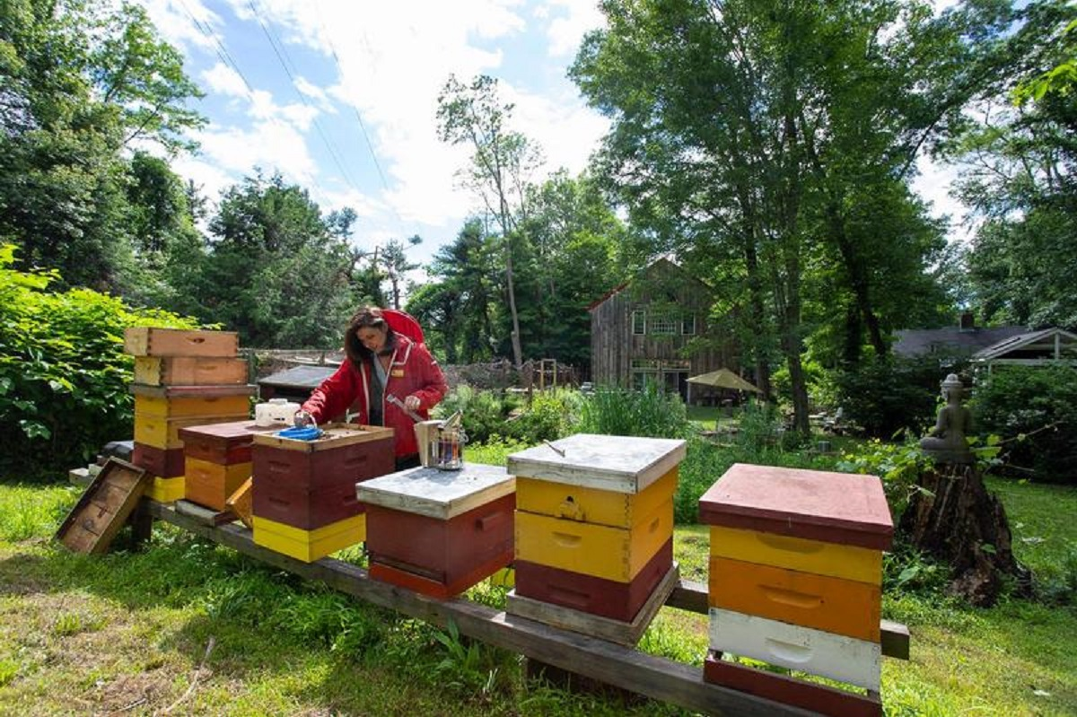 Marina Marchese with bee hives