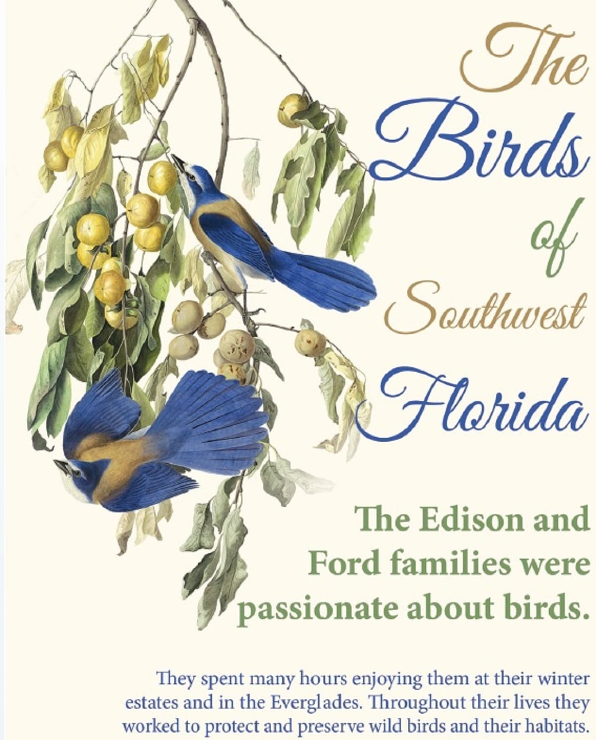 Graphic for The Birds of Southwest Florida